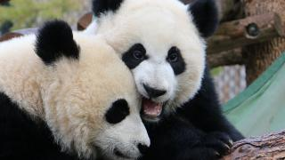 The Zoo Panda Brunch